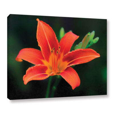 Brushstone Petals In Focus Gallery Wrapped CanvasWall Art