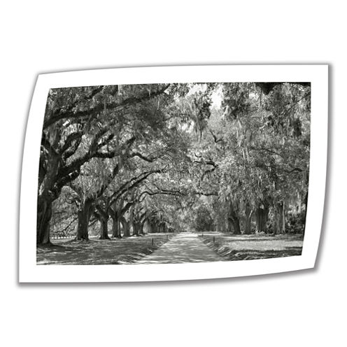 Brushstone Live Oak Avenue Canvas Poster Wall Art