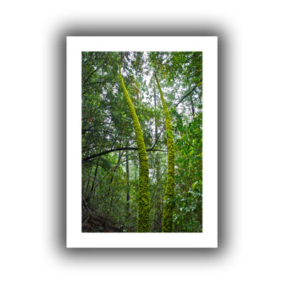 Brushstone Green Trees Canvas Wall Art