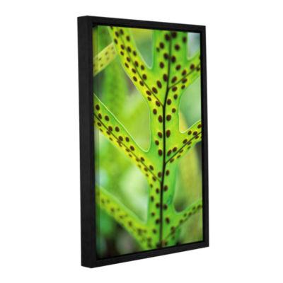Brushstone Hawaiian Laua'E Fern Gallery Wrapped Floater-Framed Canvas Wall Art