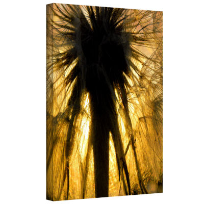 Brushstone Heart Of The Lion-Dandelion Gallery Wrapped Canvas Wall Art
