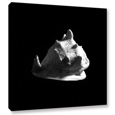 Brushstone Horned Helmet Seashell Cassis Cornuta Gallery Wrapped Canvas Wall Art