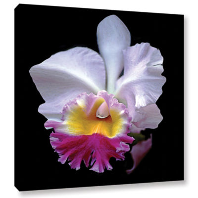 Brushstone Portrait Of An Orchid Gallery Wrapped Canvas Wall Art