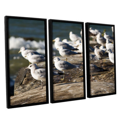 Brushstone Pigeons 3-pc. Floater Framed Canvas Wall Art