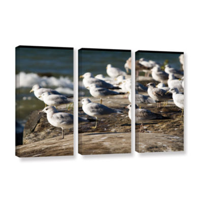 Brushstone Pigeons 3-pc. Gallery Wrapped Canvas Wall Art