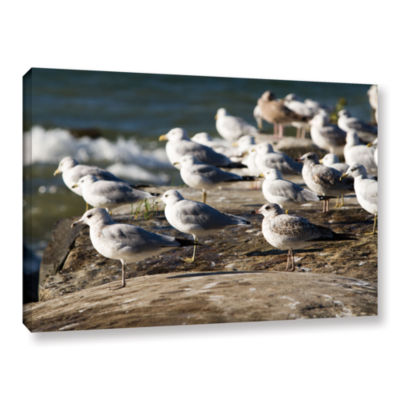 Brushstone Pigeons Gallery Wrapped Canvas Wall Art