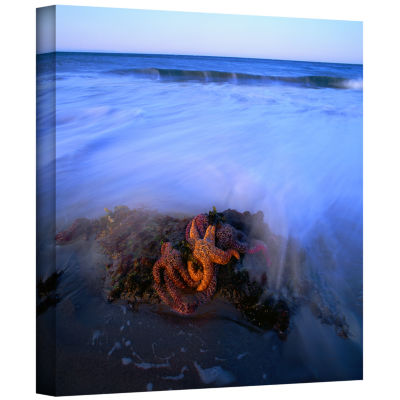 Brushstone Morning Sea Stars Gallery Wrapped Canvas Wall Art