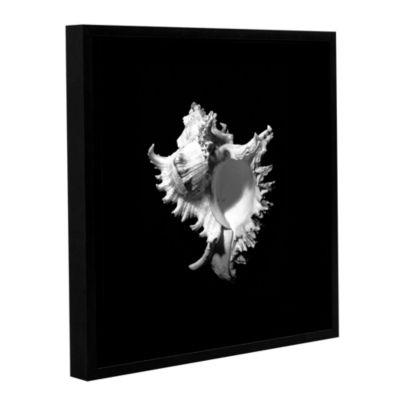 Brushstone Murex Seashell Murex Ramosus Gallery Wrapped Floater-Framed Canvas Wall Art