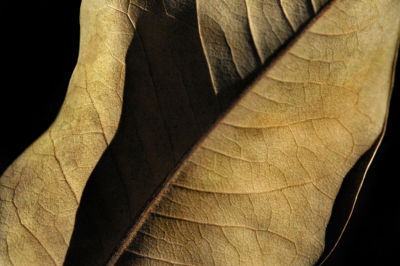 Brushstone Natural Selection (Leaf) 2-pc. GalleryWrapped Canvas Wall Art