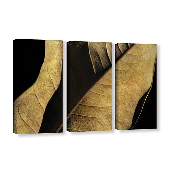 Brushstone Natural Selection (Leaf) 3-pc. GalleryWrapped Canvas Wall Art
