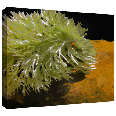Brushstone Natural Selection Gallery Wrapped Canvas Wall Art