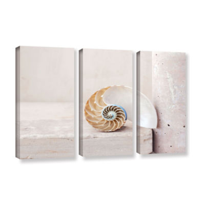 Brushstone Nautilus 3-pc. Gallery Wrapped Canvas Wall Art