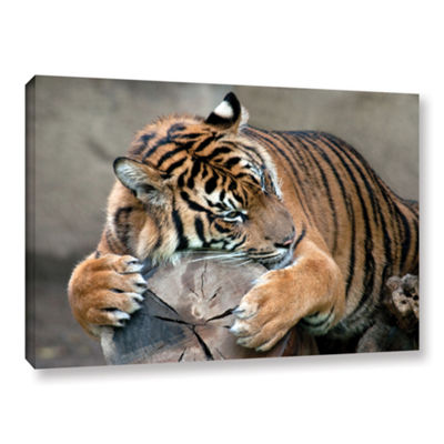 Brushstone Sleepy Gallery Wrapped Canvas Wall Art