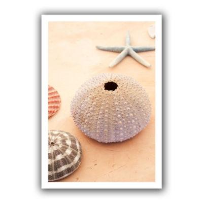 Brushstone Seashells Canvas Wall Art