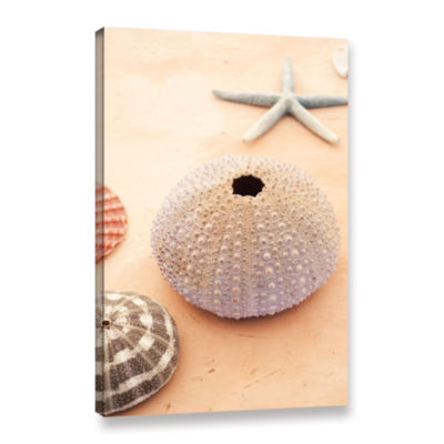 Brushstone Seashells Gallery Wrapped Canvas Wall Art