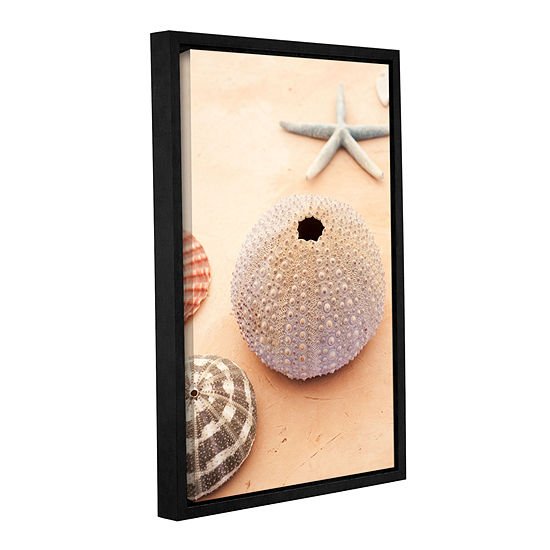 Brushstone Seashells Gallery Wrapped Floater Framed Canvas Wall Art