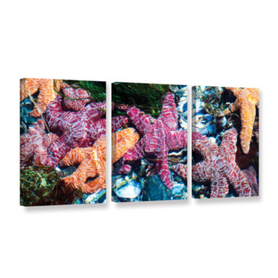 Brushstone Seastar Pano 3-pc. Gallery Wrapped Canvas Wall Art