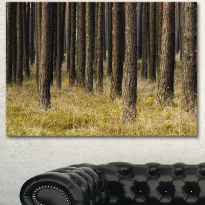 Designart Dark Fall Forest With Green Grass ModernForest Canvas Art