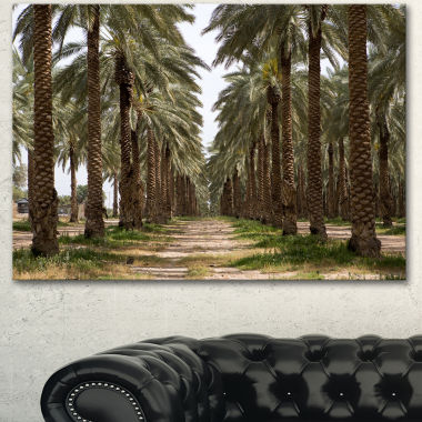 Designart Date Palm Plantation Photography ModernForest Canvas Art