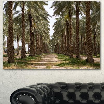 Designart Date Palm Plantation Photography ModernForest Canvas Art - 3 Panels
