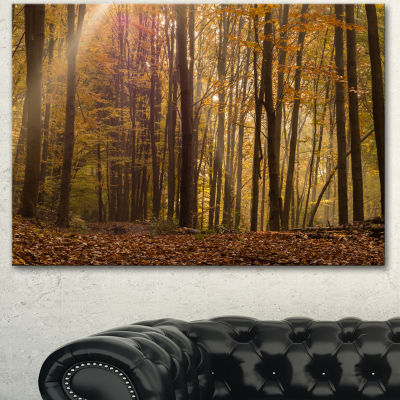 Designart Dense Forest In Rays Of Rising Sun Forest Canvas Art Print - 3 Panels