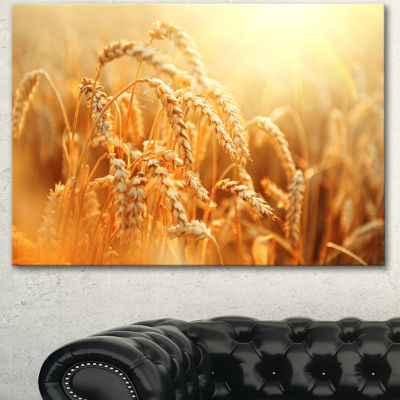 Designart Ears Of Golden Wheat Close Up Large Landscape Canvas Art - 3 Panels