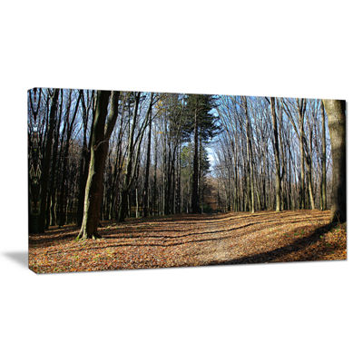 Designart Fall Forest In Sunlight And Shadows Modern Forest Canvas Art