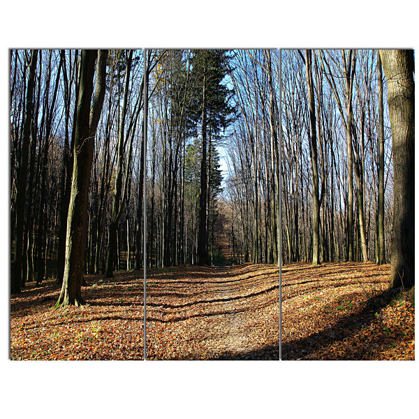 Designart Fall Forest In Sunlight And Shadows Modern Forest Canvas Art - 3 Panels