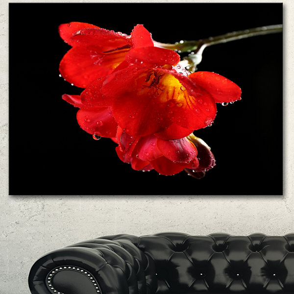 Designart Freesia Flower On Black Background LargeFloral Canvas Artwork - 3 Panels