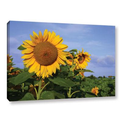 Brushstone Sunflower (garden) Gallery Wrapped Canvas Wall Art