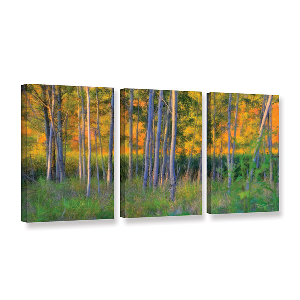 Brushstone Stumpy Basin 3-pc. Gallery Wrapped Canvas Wall Art