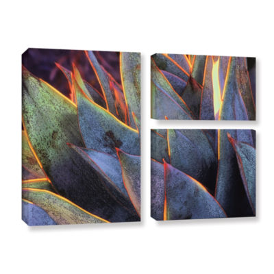 Brushstone Sun Succulent 3-pc. Flag Gallery Wrapped Canvas Wall Art