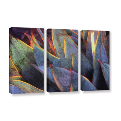 Brushstone Sun Succulent 3-pc. Gallery Wrapped Canvas Wall Art