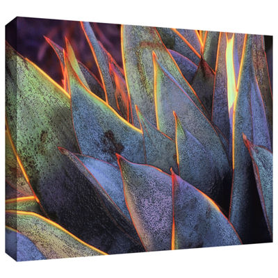 Brushstone Sun Succulent Gallery Wrapped Canvas Wall Art
