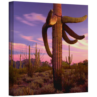 Border Twilight Gallery Wrapped Canvas Wall Art