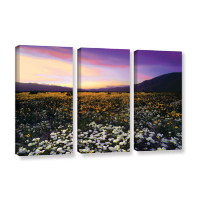 Borrego Desert Spring 3-pc. Gallery Wrapped CanvasWall Art