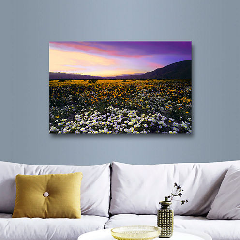Borrego Desert Spring Gallery Wrapped Canvas WallArt