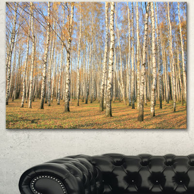 Designart Autumn Birch Grove In Sunlight Modern Forest Canvas Art