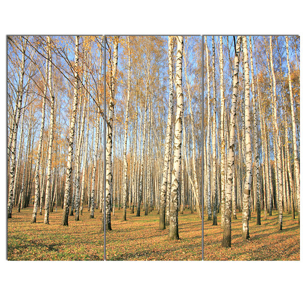 Designart Autumn Birch Grove In Sunlight Modern Forest Canvas Art 3 Panels