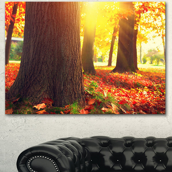 Designart Autumn Trees In The Sunlight Large Landscape Canvas Art