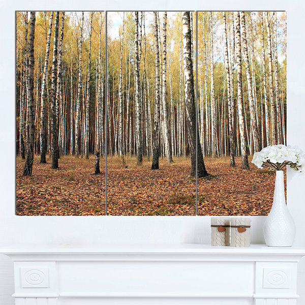 Designart Beautiful Birch Forest Photography Modern Forest Canvas Art 3 Panels