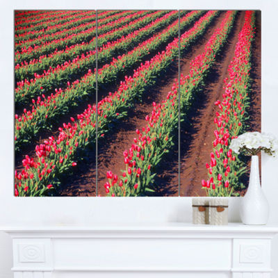 Designart Beautiful Field Of Red Tulip Flowers Large Landscape Canvas Art 3 Panels