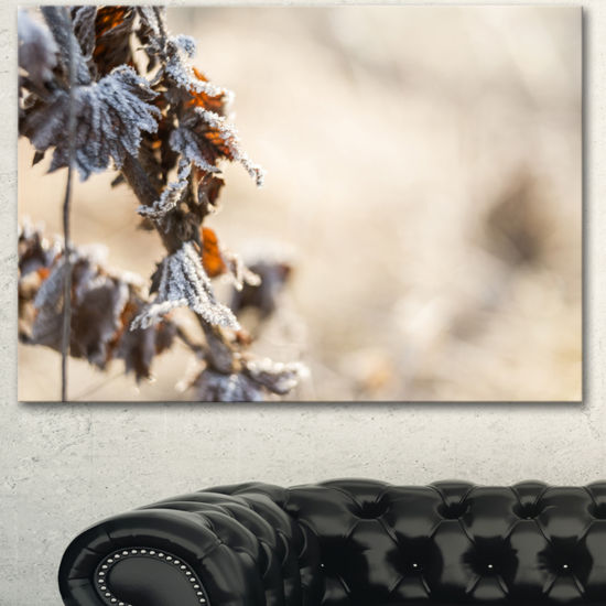 Designart Beautiful Grass Covered With Ice FloralCanvas Art Print