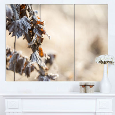 Designart Beautiful Grass Covered With Ice FloralCanvas Art Print 3 Panels