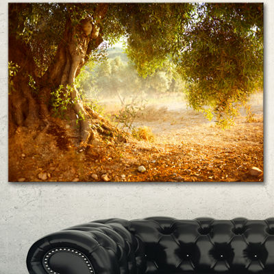 Designart Beautiful Old Olive Tree Large LandscapeCanvas Art Print 3 Panels