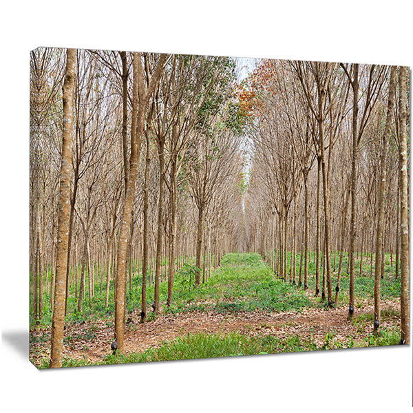 Design Art Beautiful Rubber Plantation Photo Modern Forest Canvas Art