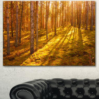 Designart Beautiful Sunrays In Thick Forest ModernForest Canvas Art