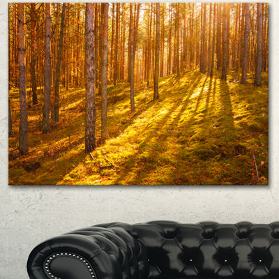 Designart Beautiful Sunrays In Thick Forest ModernForest Canvas Art 3 Panels