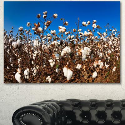 Designart Blooming Alabama Cotton Field Large Landscape Canvas Art