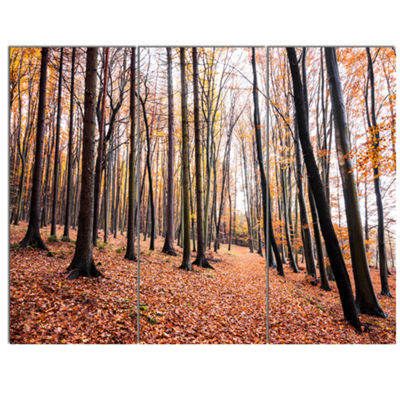 Designart Bright Fall Forest With Clear Sky ModernForest Canvas Art 3 Panels